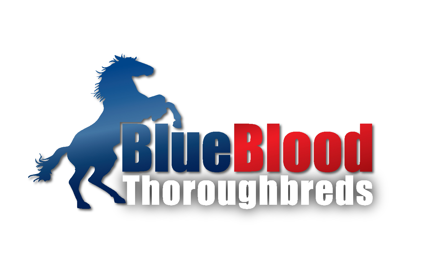 Blueblood has 3 winners in a week It has been a very successful week for Blueblood Thoroughbreds across the country, with 3 out of our last four runners winning and the other coming second. Read More.