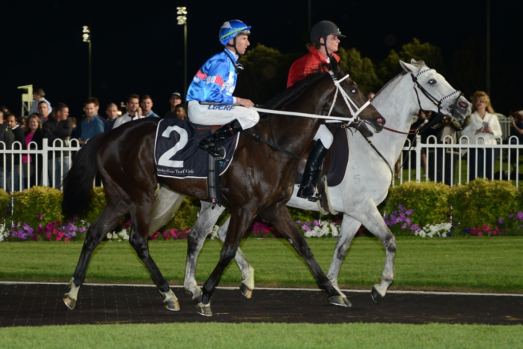BLACK REVOLVER favourite at Kensington (Randwick)