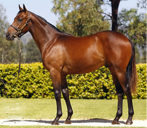 Another Invincible Group Three Winner