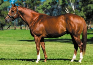 Star Witness Stallion