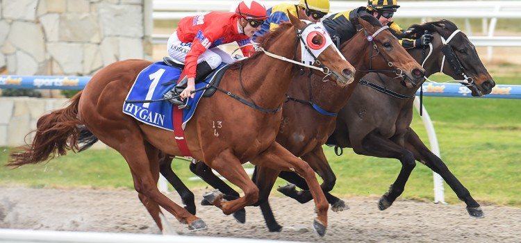 WELD MAKES IT 3 WINS FOR BLUEBLOOD CONNECTIONS