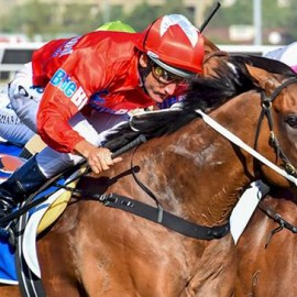 Adelaide on the Agenda For BlueBlood's Mare