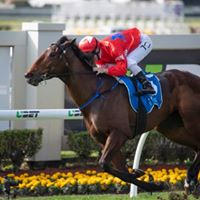 SYNDICATORS' DOMINATION AND ANOTHER CUP RUNNETH OVER