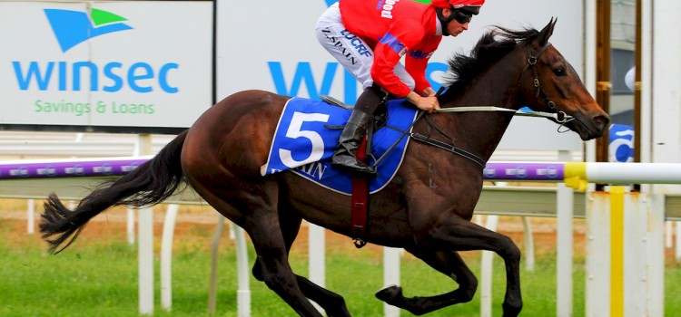 BlueBlood's Horse Wins On Melbourne Cup Day