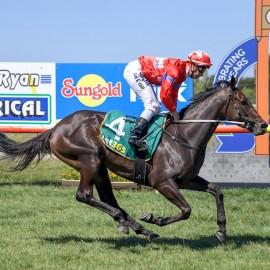 BLUEBLOOD'S SEBRING MARE IMPRESSIVE 7 LENGTH WINNER