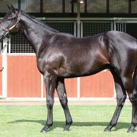 SUCCESSFUL DAY 2 PURCHASE – BLACK BEAUTY COLT BY BRAZEN BEAU